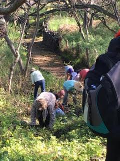 Volunteers from Keauhou Canoe Club clearing a portion of the Ala Kahakai